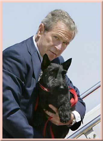 Με ποιο σκύλο μοιάζει ο Λίο...